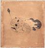 Baudroie, 2015, broux de noix feutre et stylo bille sur papier Velin, 20x21 cm