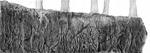 Falaise, 2016, collage, encre de chine et feutre fin