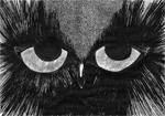 Hibou, 2016, encre de chine et feutre fin